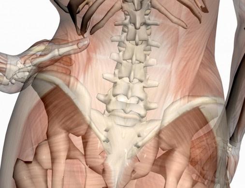 ひかり接骨院が考える骨盤の位置に影響するもの