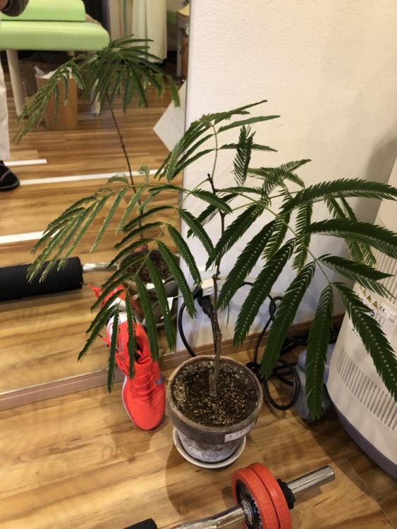 ひかり接骨院の植物
