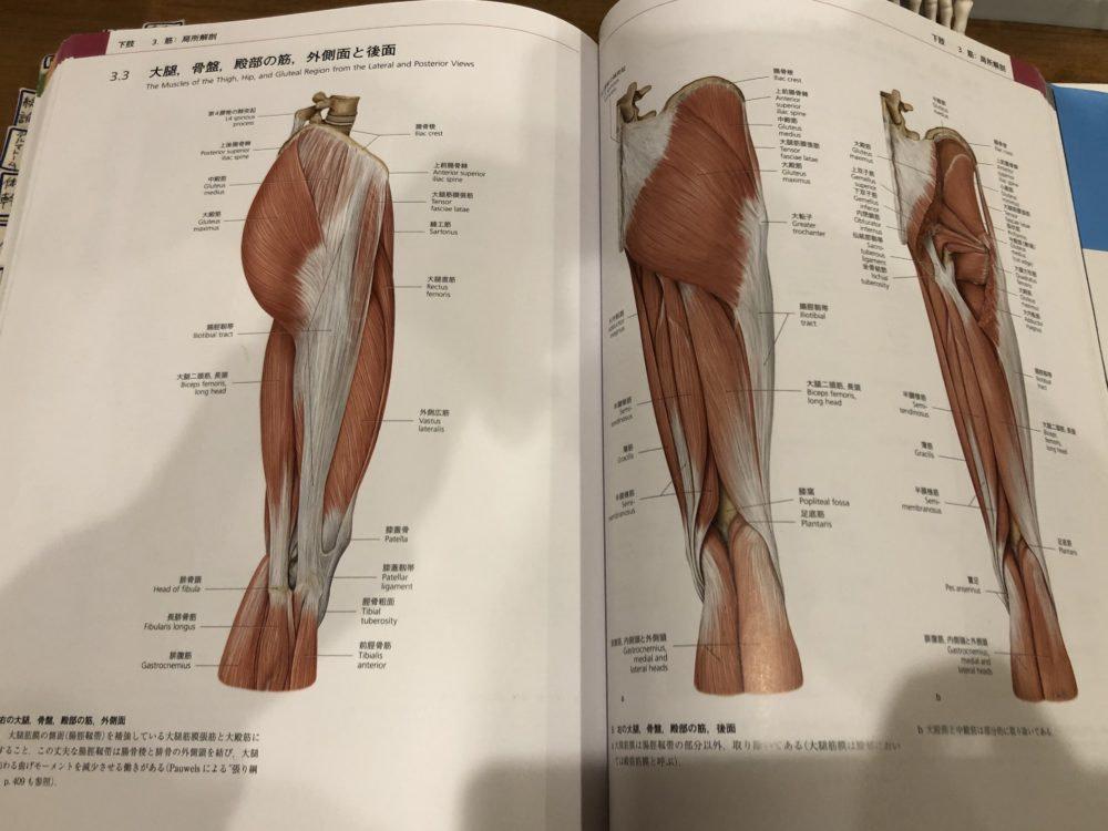 腸脛靱帯の解剖学