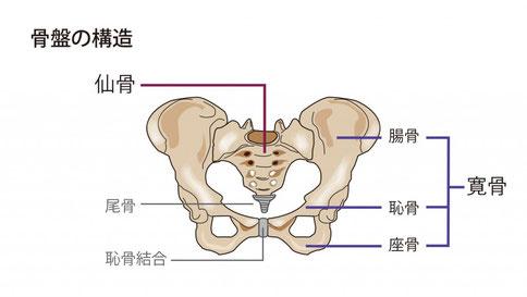 ひかり接骨院が考える骨盤矯正のイメージ