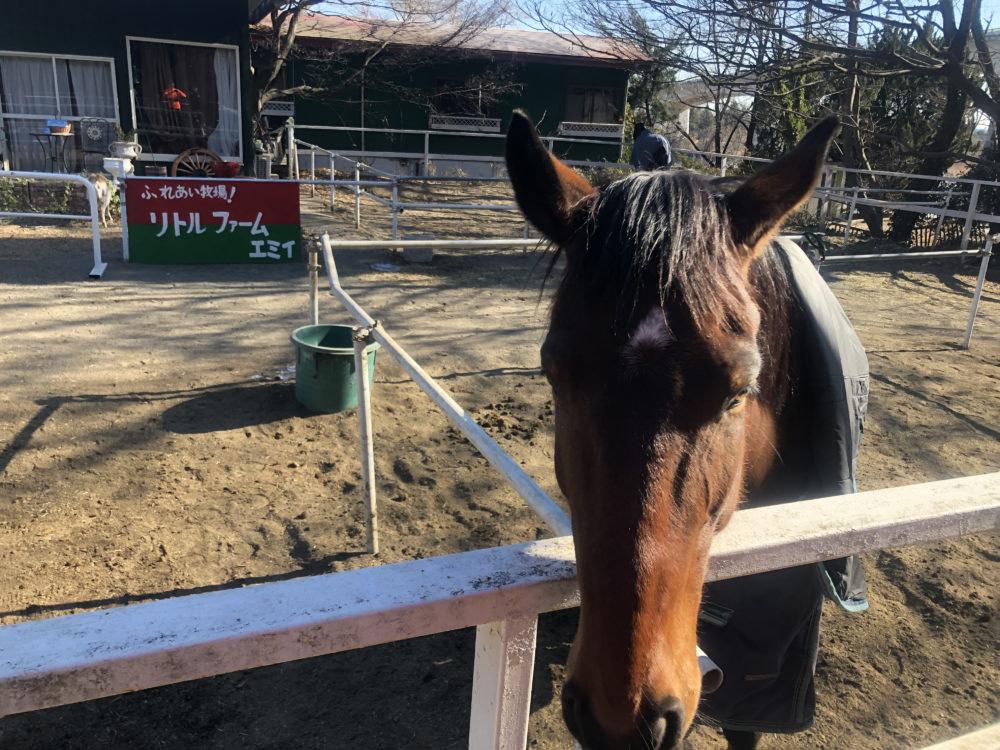前橋市の馬
