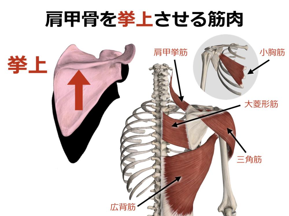 ひかり接骨院での上肢の評価