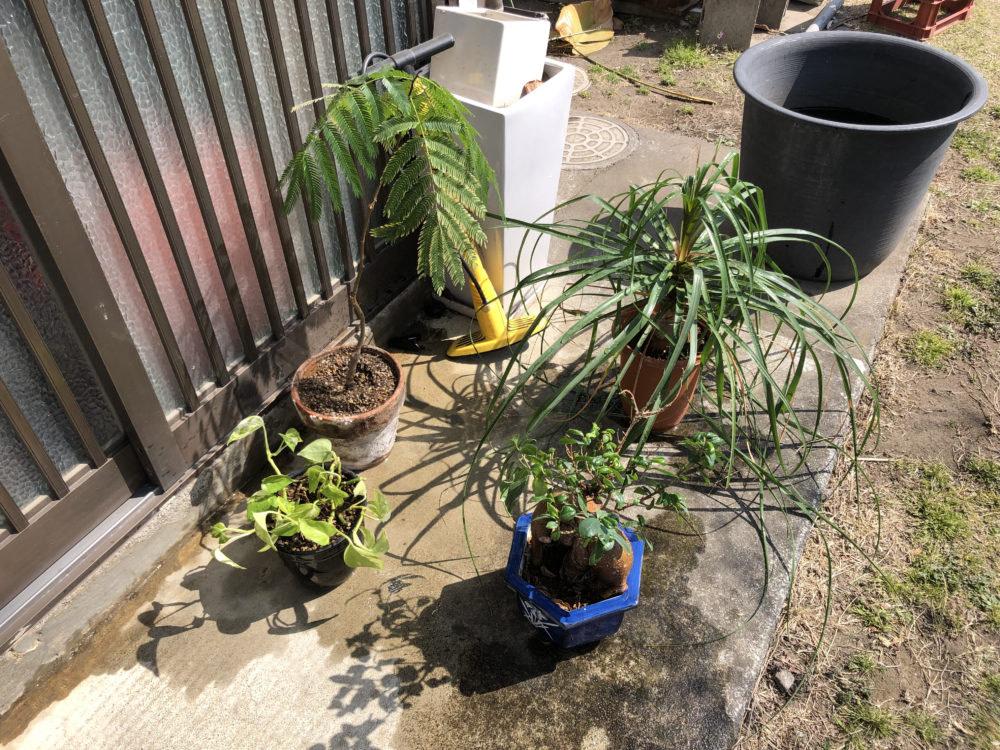 接骨院の植物